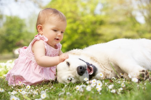 Ways Dogs Shape an Optimistic Personality of Your Child