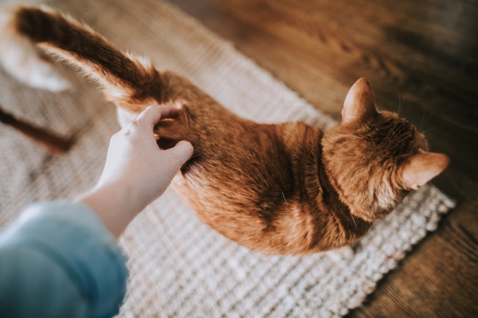Cleaning Tips for Getting Rid of Your Pet's Mess